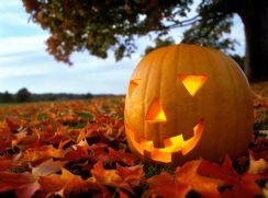 Pumpkin in Field.jpg