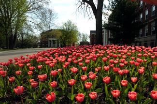 Spring 2007 Campus.jpg