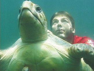J Nichols Turtle Swim.jpg