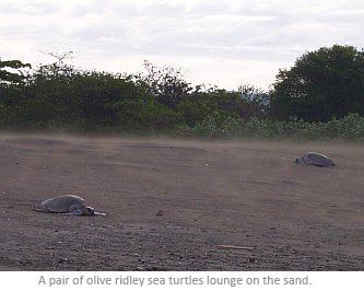 costarica_wtis_turtles.jpg
